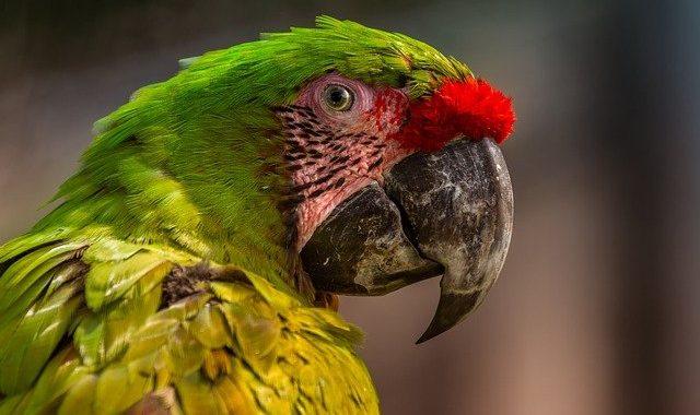 Karma dla papug